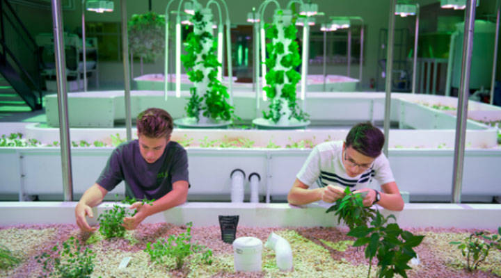 Young professionals working with plants
