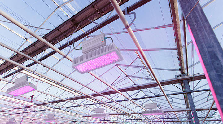Led lighting in greenhouse to grow successfully