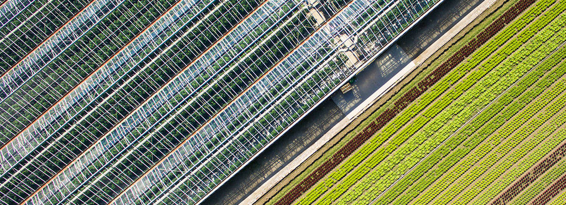 Climate screens in greenhouses increase your yields and cut your costs