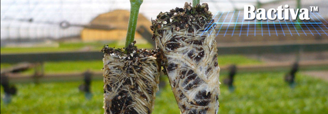 Beneficial microorganisms for crop production