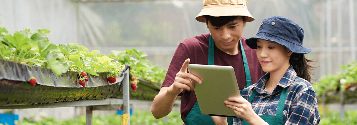 Labour shortage | attracting young people into the soft fruit sector