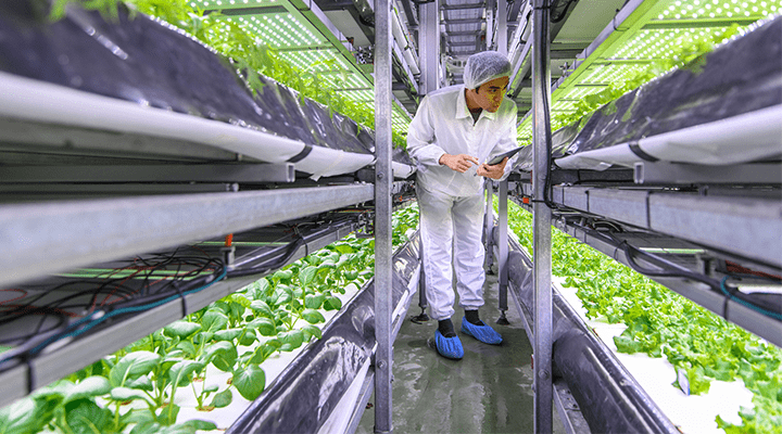 The pandemic is a wake up call and speeds up optimisations in horticulture