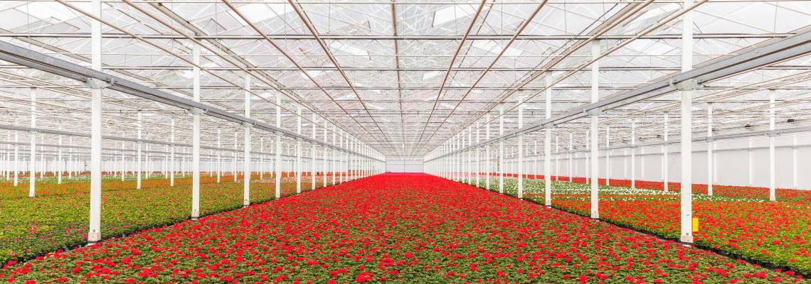The earth in a greenhouse, Labour scarcity and Geothermal energy